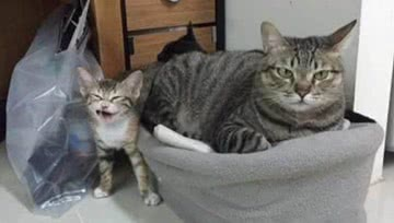 主人正在睡觉,突然听到猫咪一声惨叫,走过去一看狂笑不止!