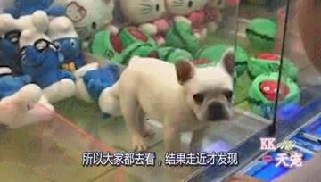 狗狗被商家放入娃娃机内,任由顾客夹着玩,路过的人都不忍直视!