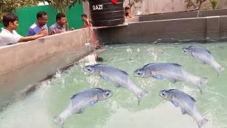 现成的鱼塘不用,男子却在水泥池里养鱼,一年赚的是鱼塘的3倍!
