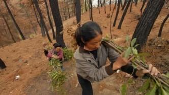 """以后农村的""""高利润""""项目,趁现在干的人不多,先下手先致富!"""