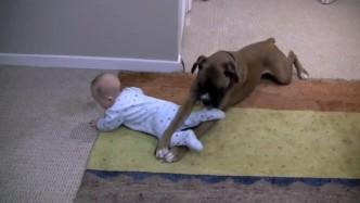 妈妈出门让狗狗照看宝宝 回来一看哭笑不得
