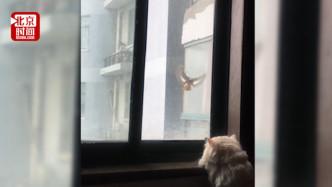 跨物种的友谊!小鸟飞10楼每天准时窗前撩拨猫咪
