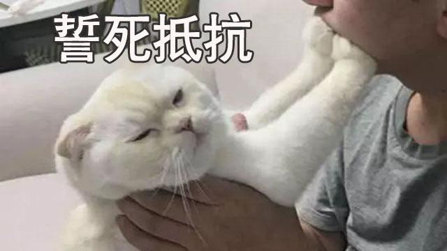 猫:丑东西离我远点