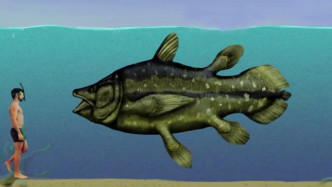 大白鲨与其他史前鱼类体型差距有多大