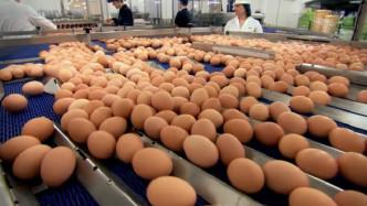 超市的鸡蛋不是母鸡下的?实拍工厂生产鸡蛋全过程,看完恍然大悟!