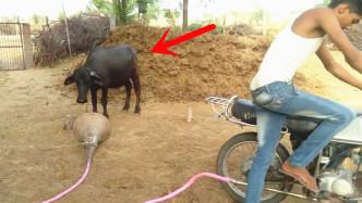 排气管接上喇叭后,威力震跑公牛!