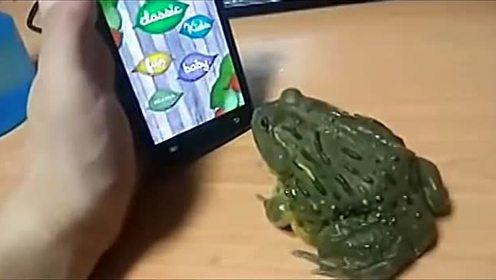 搞笑动物-让青蛙玩游戏的严重后果