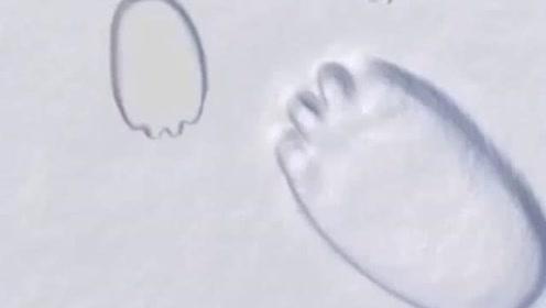 八年級語文下冊8 時間的腳印(陶世龍)
