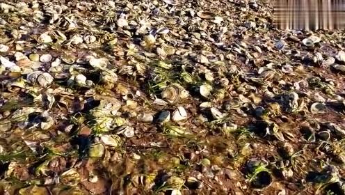 壮观!龙口东海海边涌来超多海货…有人用车拉