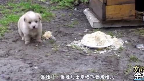 爆笑四川话配音:土狗护食凶主人被恶搞,笑的