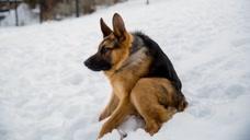 """女主人养了一只""""驼背""""的猎犬,网友:狗狗看着好可怜"""