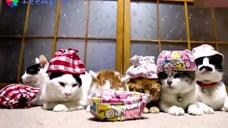 给六只猫咪同时洗澡是什么体验?主人:养只二哈挺好的