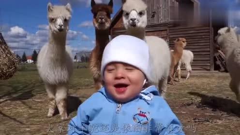 羊驼还真是可爱,小朋友都感到非常开心,小朋