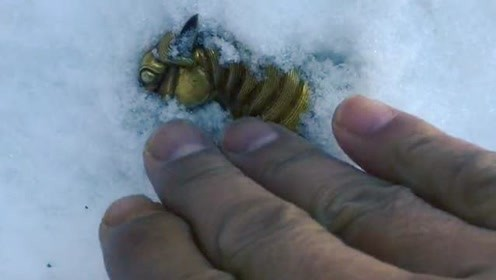 纯金的小金马,我在雪堆中无意间发现的,出门捡到它感觉就像中彩票一样!