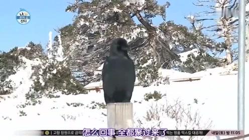 我独自生活:EXO秀珉野外吃饭,乌鸦突然飞来,