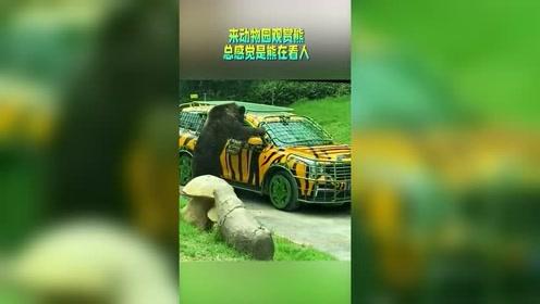 来动物园观赏黑熊,总感觉是熊在看人,为了保险还要把车套上钢丝