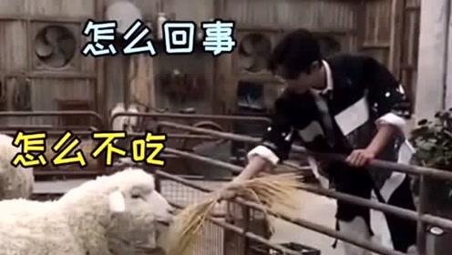 肖战考古视频,战哥喂养小绵羊的样子好可爱,我真不想告诉他这是个机器羊
