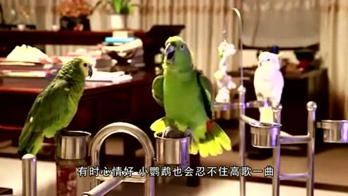 鹦鹉学会猫叫后跟三只猫吵架,千万憋住别笑,