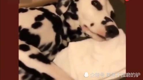 狗宝宝吃*,狗妈妈生无可恋,搞笑动物配音笑死