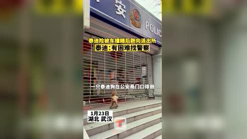#热点速看#23日在湖北武汉,网友爆料称,一只泰迪差点被车撞到,随后直接跑向派出所。民警表示,这只泰迪不是派出所里的。