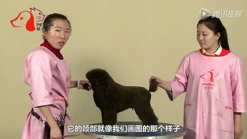 宠物美容师造型教学视频 派多格宠物学校