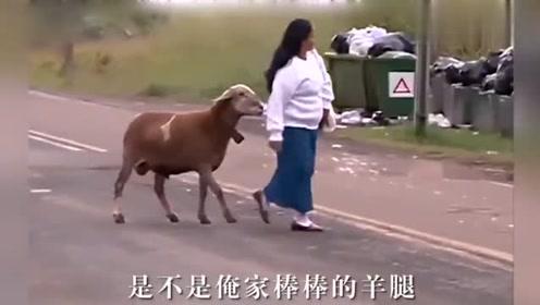 河南方言 动物搞笑配音 肚子都笑疼了 不笑你打