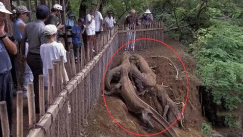 印度村民住树上隔离
