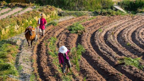 2020年,农村土地腾退每亩地补偿8万,消息可靠吗?