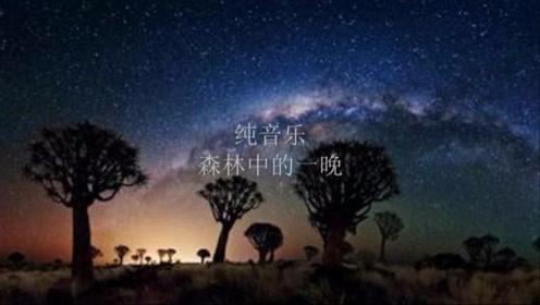 班得瑞-《森林中的一晚》,超好听的纯音乐,大自然的声音