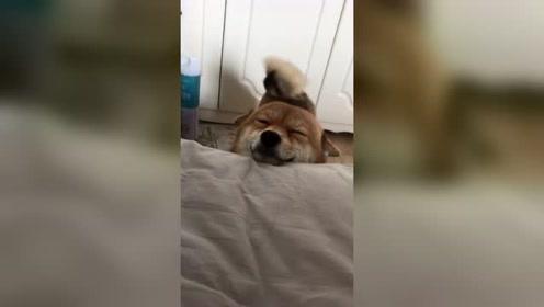 每天起床都会看到这触目惊心的一幕,还有感谢上一条视频,给我上热门!