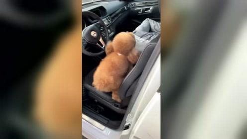 带狗狗出门,就把车弄脏