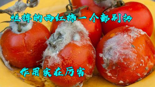 烂掉的西红柿,一个都别扔,放在家里特别值钱,还不懂真是亏大了