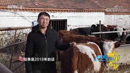 每头牛多卖2千元,养殖户的收入却不涨,利润去哪了?