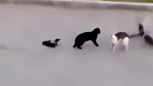 两只小鸟与小花猫之间的战争,大战一触即发!