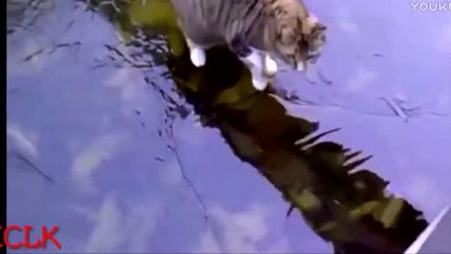 挑战尽量不笑的动物搞笑视频