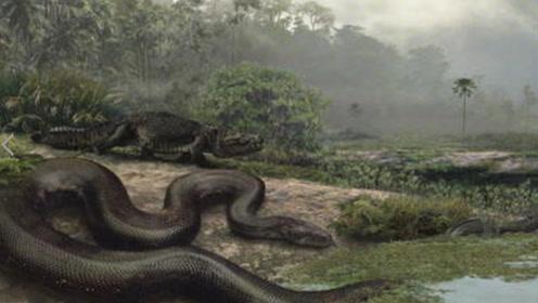 农村发现一条大肚子的大蟒蛇,堆满了一条船