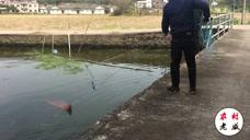 农村小伙飞网捕鱼,一网下去,小伙乐了