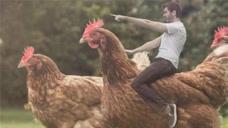 世界上最大的鸡,身高超1米体重达32斤,网友称其为鸡霸王