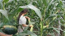大雨过后,农村小杨去地里溜达,没想到却收获了这么多土味!