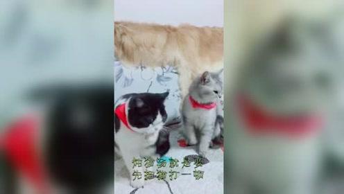 恶搞猫咪最有趣了,每一次做这种配音,我要笑