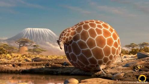 搞笑的动物短片:假如地球上的动物都变成大肚