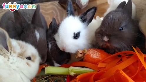 动物搞笑视频集锦,萌宠爆笑大集合!开心一刻