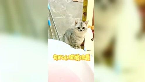 有的小猫喜欢看人洗澡,看着看着就流鼻血了