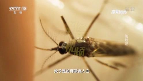 蚊子是如何吸食人血并传播疾病的|原来如此