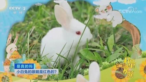 白兔眼睛是红色的是真的吗?专家的回答颠覆认知,来看