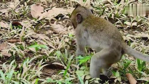 小猴子让美丽的游客自拍,美丽的女孩开心的和