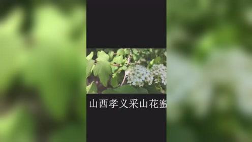 我的养蜂生活短视频集锦(最后结尾有惊喜)