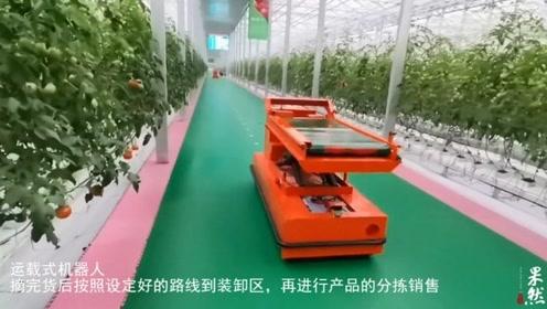 果然视频|高质量发展看山东:机器人采果,这个大棚就像科技馆