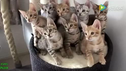 动物搞笑视频精华集锦 乐的肚子痛