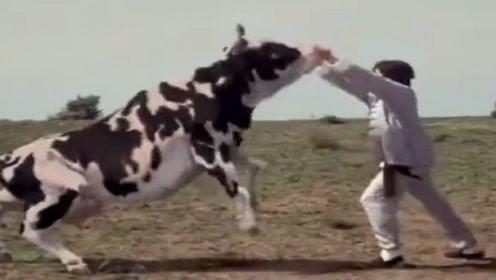 苏教版七年级语文上册4 安恩和奶牛
